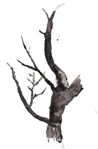 Tree. Watercolor. Janice Greenwood.