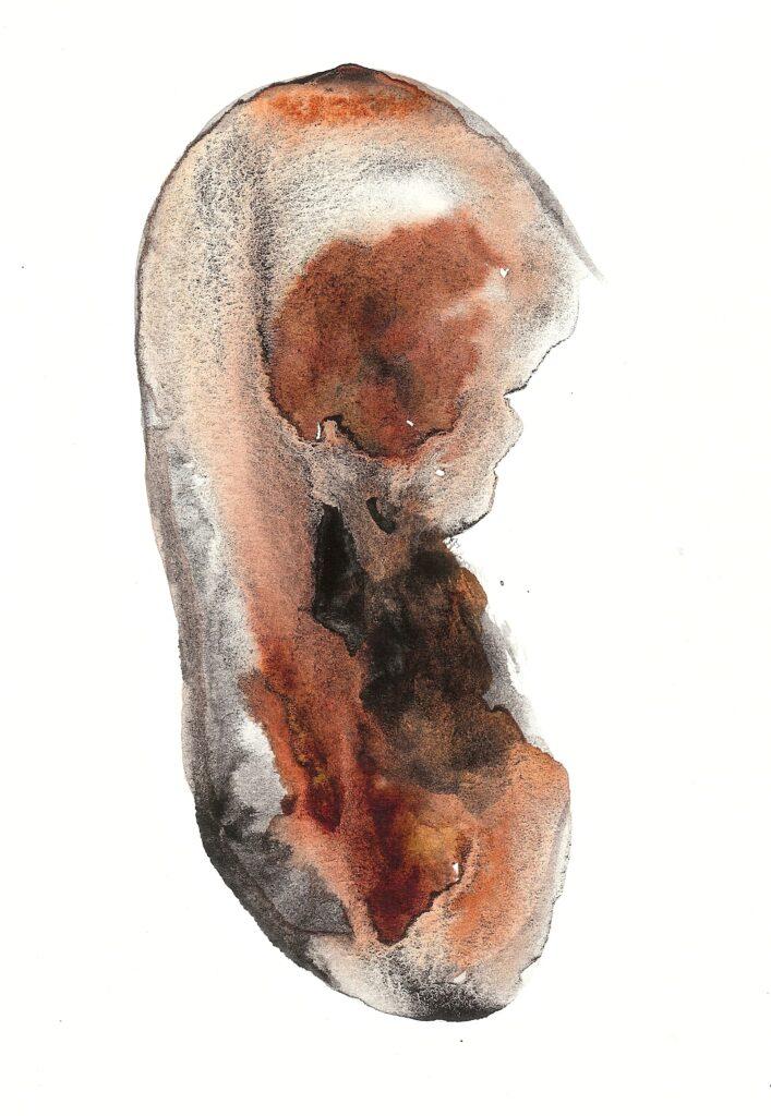 Wanting Fetus. Watercolor. Janice Greenwood. Original Art.